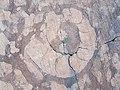 Fossil in the marble in Cava Buscada - Erto e Casso, Pordenone, Friuli-Venezia Giulia, Italy - 2021-09-27.jpg