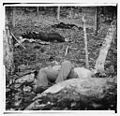 Four dead soldiers in the woods near Little Round Top, Gettysburg, Pa.jpg