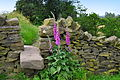 Foxgloves for Memories.JPG