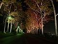 Fraser avenue at night.jpg