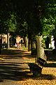 Friedhofsallee Hannover Blick Richtung Stadtfriedhof Seelhorst Hoher Weg Lindenallee Licht und Schatten.jpg