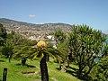 Funchal ( Portugal ) (33115102).jpg