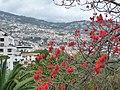 Funchal – Blick nach Norden - 5 09 - panoramio - giggel.jpg