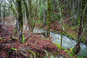 Gales Creek near OR6 and OR8 - Oregon.JPG