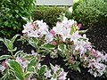 Galway Flowers.jpg