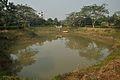 Garden Pond - Prayas Green World Resort - Sargachi - Murshidabad 2014-11-29 0186.JPG