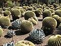 Gardenology-IMG 5195 hunt10mar.jpg