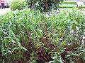 Gardenology.org-IMG 2661 rbgs11jan.jpg