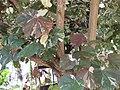 Gardenology.org-IMG 7430 qsbg11mar.jpg