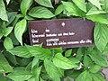 Gardenology.org-IMG 7905 qsbg11mar.jpg