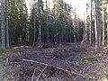 Gatchinsky District, Leningrad Oblast, Russia - panoramio (9).jpg