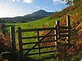 Gate leading out of Coed Ty-isaf - geograph.org.uk - 64867.jpg