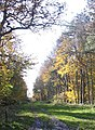 Gayhurst Wood, autumn 2006 - geograph.org.uk - 437049.jpg