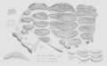 Geology and Mineralogy considered with reference to Natural Theology, plate 27e.png