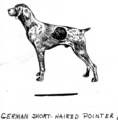 German short-haired pointer (PSF G-390001 (cropped)).png