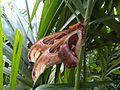 Giant moth 6.jpg