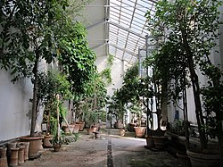 Orto Botanico Di Firenze The Free Online Dictionary And