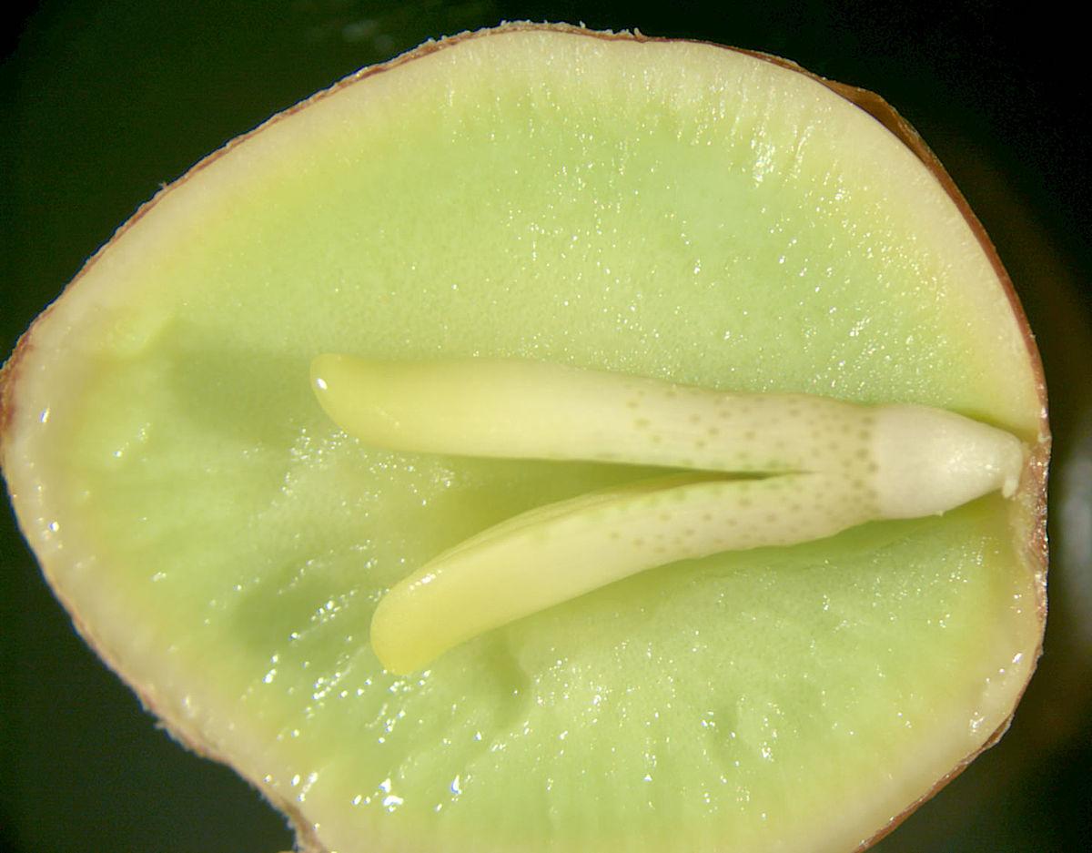 зародыш у растений как называется - 3