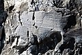 Glacial striations from Pleistocene glaciation on dolostone (Dunham Dolomite, Lower Cambrian; Route 2 roadcut, southeast of the Lamoille River bridge, Vermont, USA) 14.jpg