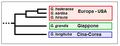 Glechoma - Cladogramma del genere.png