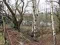 Glimpsed through trees - geograph.org.uk - 1203429.jpg