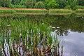 Goloseevsky Park. Orekhovatskie ponds, spring. 03.jpg