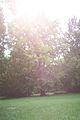 Gr. Tiergarten tree.jpg