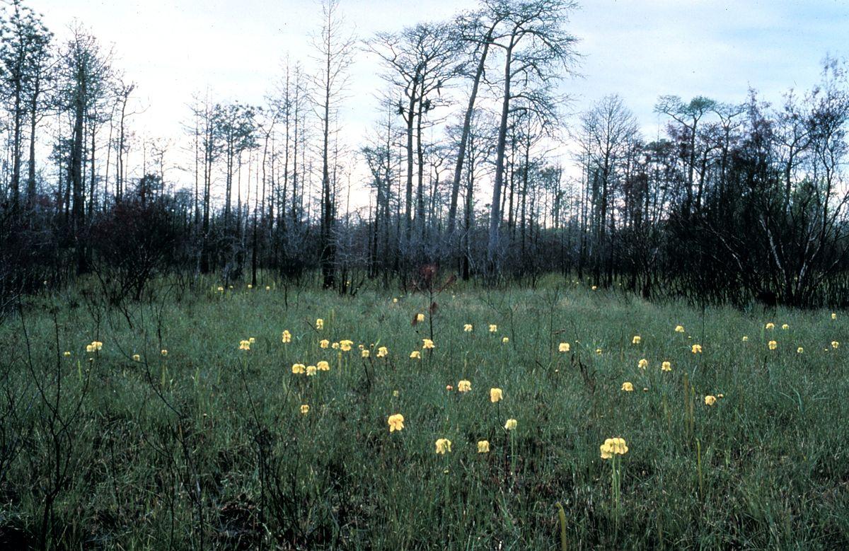 Flatwoods Wikipedia