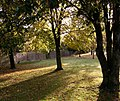 Grass verge at Chesterton - geograph.org.uk - 2139113.jpg