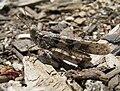 Grasshopper scotts valley 1.jpg