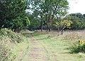 Grassy track, Kingley Vale National Nature Reserve - geograph.org.uk - 1503399.jpg