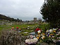 Graveyard flowers - geograph.org.uk - 1706403.jpg