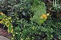 Green Spring Gardens in September (22373077268).jpg