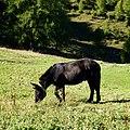 Grigna, Esino Lario, Lecco, Italy - panoramio (3).jpg