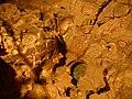 Grotte - Marmitte (Les Planches-près-Arbois) (1).jpg