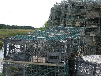 American lobster - Lobster traps on Long Island Sound near Guilford, Connecticut