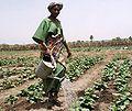 Guinea Siguiri farmer woman.jpg