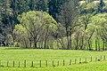Gurk Reichenhaus Auwald am Gurk-Fluss N-Ansicht 11042016 3027.jpg