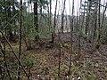 Hög Skön 56 Sundsvall 01.JPG