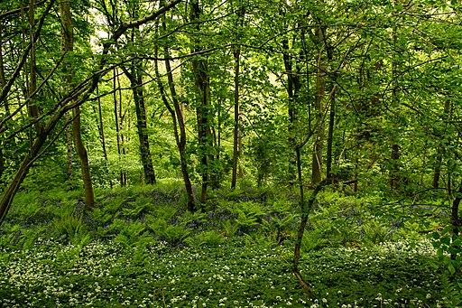 Hackfall Wood (38732892)