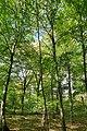 Hambacher Forst bei Morschenich DE 2018-09-09 C.jpg