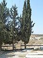 Hartuv cemetery P1030532.JPG