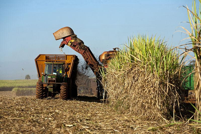 Archivo:Harvestor cutting sugarcane.jpg - Wikipedia, la enciclopedia libre
