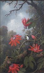 Hummingbird and Passionflowers