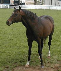 pferd steht rückständig