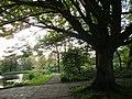 Heiloo 18-5-2010 - panoramio (167).jpg
