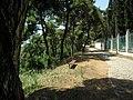 Heybeliada - panoramio (10).jpg