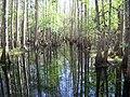 Highland Hammocks SP Swamp Trail swamp01.jpg