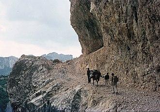Escursione con un asino in montagna nel 1961.