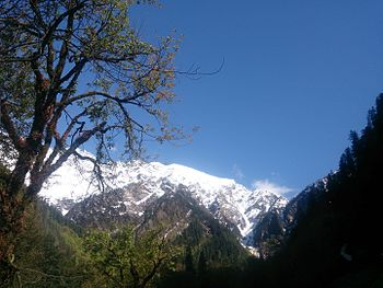 Himalayas from Ming Thatch.jpg